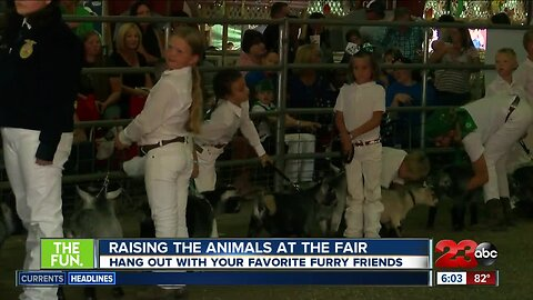 Animals you can hang out with at Kern County Fair
