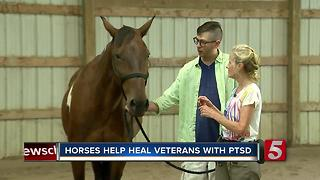 Rescued Horses Help Veterans With PTSD - Video