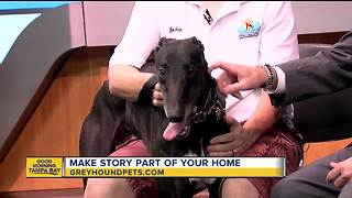 Rescues in Action July 22, 2018   Make Story a part of your family - Video