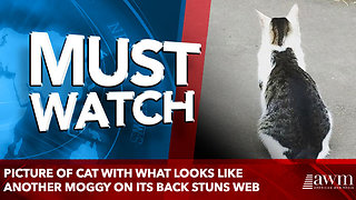 Picture of cat with what looks like another moggy on its back stuns web - Video