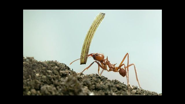 10 Incredibly Strong Insects