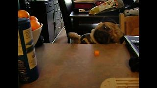 10 Reasons Why Pugs And Bulldogs Deserve All The Love - Video