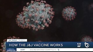 In-depth: How the Johnson & Johnson coronavirus vaccine works
