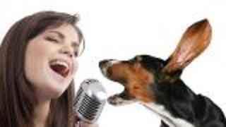 Canines Sensitive to Acoustic Cues - Video