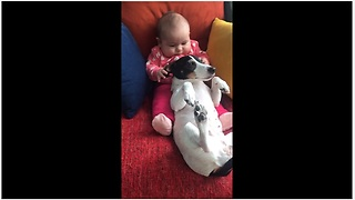 Adorable Baby Loves Tugging On Cute Doggy's Ears - Video