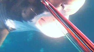 Diver defends himself from attack by great white shark