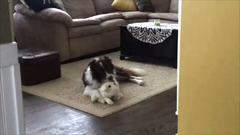 Dog treats stuffed animal like puppy, preciously grooms it