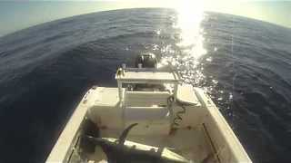 Black marlin jumps in boat