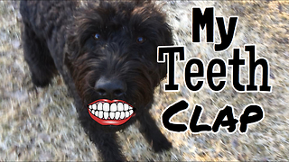 Meet George, the non-barking dog!  - Video