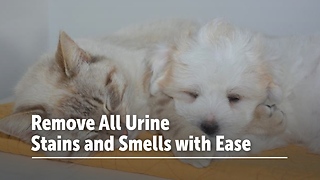 Remove All Urine Stains and Smells with Ease