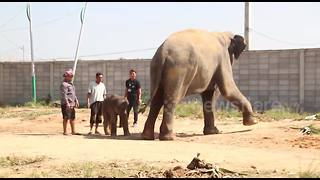 First baby elephant born in Thailand in 2018 - Video