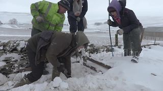 Farmer saves sheep covered in snowdrift from a certain death - Video