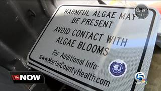 Algae warning signs posted in Martin County - Video