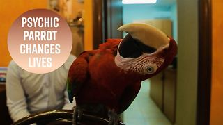 How a psychic parrot became a travel guru - Video