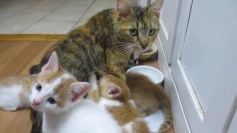 Hungry kittens refuse to give mother a break