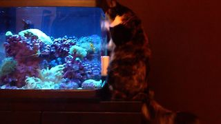27 Cats Who Love Fish - Video