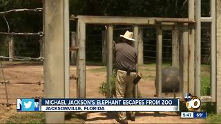 Michael Jackson's elephant escapes from zoo