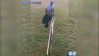 9-foot Burmese python found in Manatee County