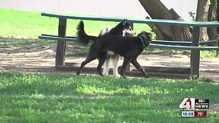 Dog park patrons frustrated with broken glass - Video