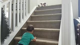 Border Collie invents new game to play with baby