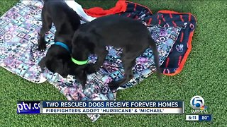 Firefighters adopt dogs they rescued from Hurricane Michael