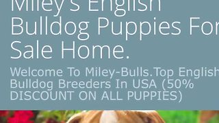 Buying a puppy online? Here's what to look out for - Video
