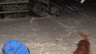 Kids and Dog Play in Wales Snow After Storm Caroline - Video