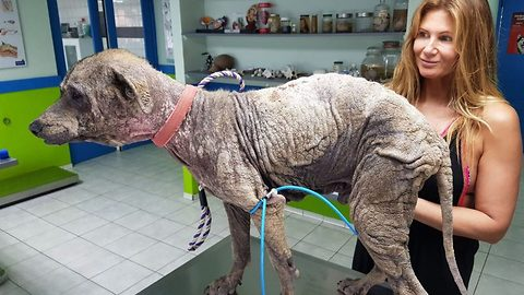 Well stone me! Incredible transformation of abandoned dog who looked like he had turned to stone