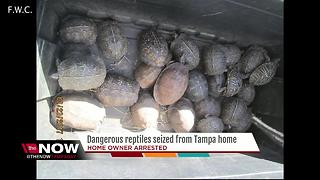 Dangerous reptiles seized from Tampa home - Video