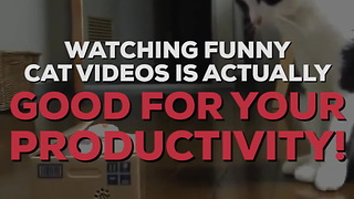 Cute Cat Videos Actually Make You More Productive!