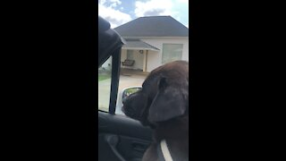 Bear goes for a ride