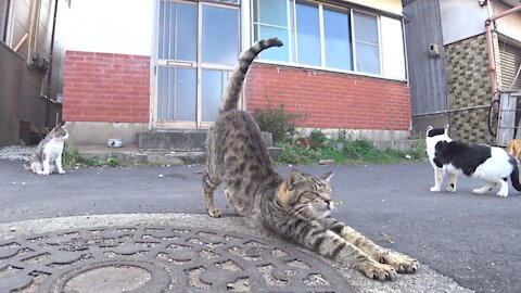 Stray cat's stretching