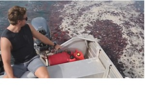 Surfers Navigate Bloom of Red Jellyfish Off West Australian Coast - Video