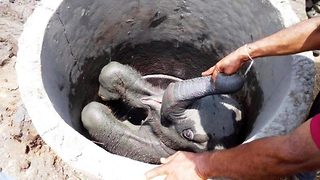 Sri Lankan officials rescue baby elephant five hours after it had fallen into a well - Video