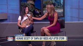 Humane Society of Tampa Bay refuse for abandoned pets after Irma - Video