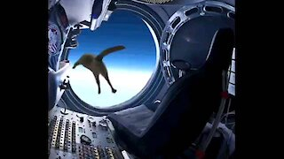 Cat flies at space
