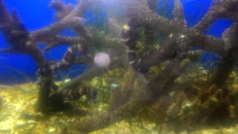Amazing nature spotted seahorse