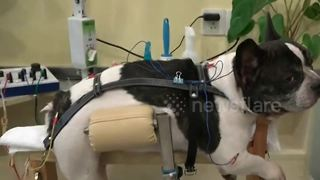 Clinic treats pets with acupuncture in China - Video