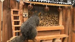 Man builds a bar for squirrels