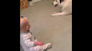 Husky with zoomies sends baby into hysterical giggle fit
