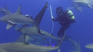 Scuba Diver Finds Himself Completely Surrounded By Sharks - Video