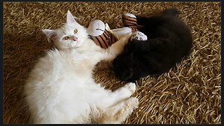 Kittens Engage In An Epic Battle For Tiger Toy Dominance