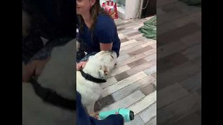 Soggy Dog Gets Salon Pampering Amid Townsville Floods