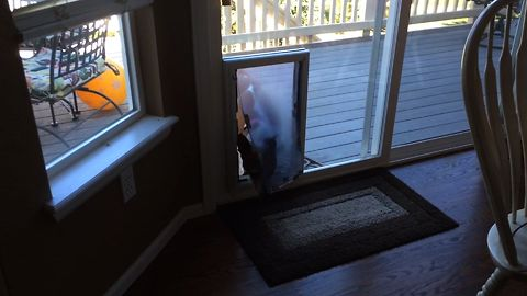 Doggy Scared of Doggy Door