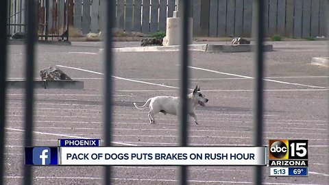 Group of dogs dodge cars, stop traffic on Interstate 17