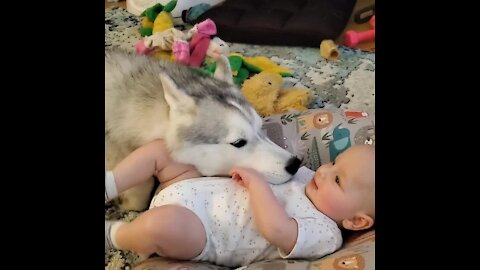 Husky and 4-month-old baby are already best friends
