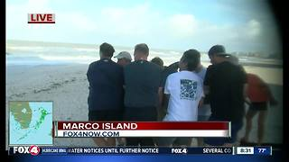 Dolphin rescue on Marco island after Hurricane Irma - Video