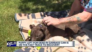 Puppy left for dead in garbage making remarkable strides in his recovery - Video