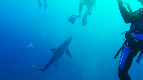 Large shark's sudden close approach scares divers
