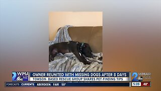 Owner reunited with dogs lost following car accident on I-270